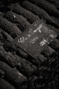 BGT112-200x300 In vino veritas oenotourisme