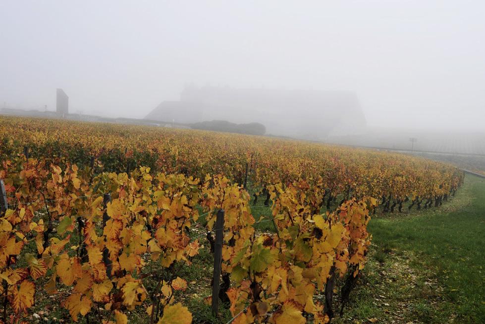 Chateau du Clos Vougeot dans la brume