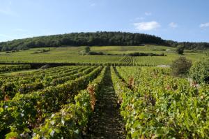 1893-300x199 In vino veritas oenotourisme