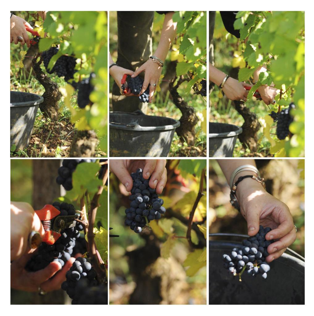 2043-1017x1024 Le bon vin de l'Ivresse oenotourisme Reportages