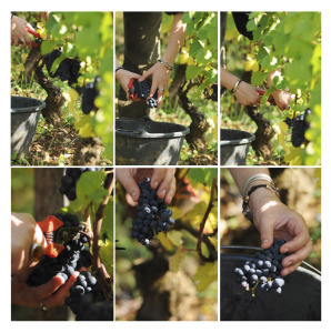 2043-298x300 In vino veritas oenotourisme