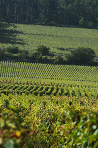 2103-199x300 In vino veritas oenotourisme