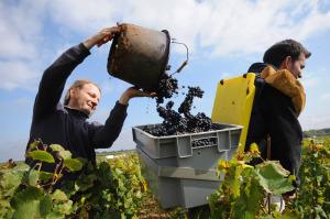 2133-300x199 In vino veritas oenotourisme