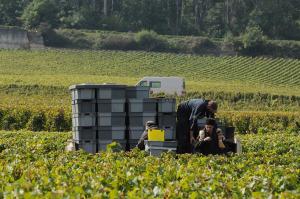 2152-300x199 In vino veritas oenotourisme