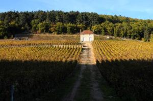 24310-300x199 En Chambertin oenotourisme Reportages