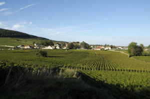 2471-300x199 En Chambertin oenotourisme Reportages