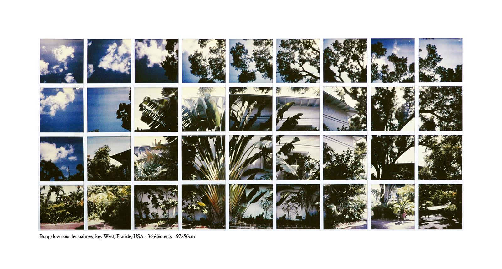 « Les rencontres photographiques ViaSilva »-PALMES- KEY WEST©PascalTherme