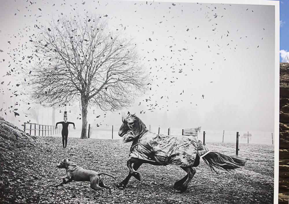La_Gacilly-_Emanuele_Scorcelletti-_Equus-3 LA GACILLY AU PAS DE COURSE ET POUR AUTANT…. ART