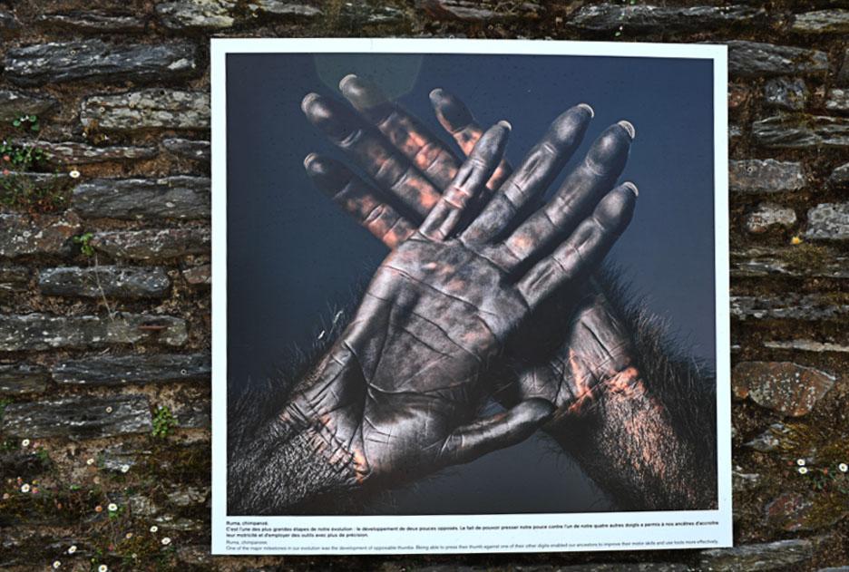 La_Gacilly-_Tim_FLACH__plus_quhumains_-1 LA GACILLY AU PAS DE COURSE ET POUR AUTANT…. ART