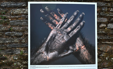 La_Gacilly-_Tim_FLACH__plus_quhumains_-440x270 Articles parus dans la presse