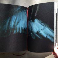"""©Hélène David """"Noces ou les confins sauvages"""". Edition sun/sun."""