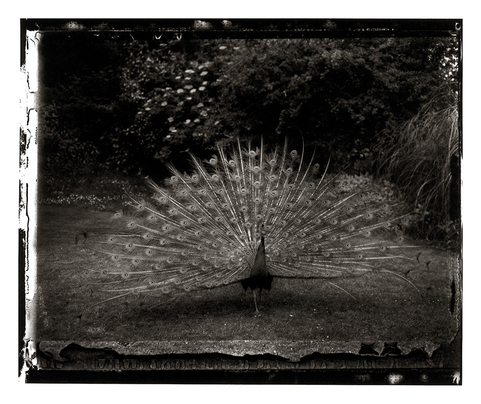 sarah-moon-photographer-3863 SARAH MOON PASSÉ PRÉSENT. ART PHOTOGRAPHIE